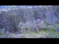 Jacarandá contornando os ramos secos das estevas, ao final da tarde do 3º dia