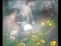 2012 - Castanuela brinca com coelho morto